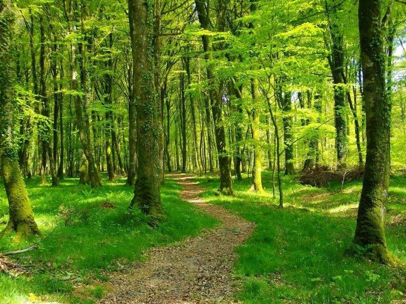 Camping Le Fanal : Sans Tfdhhitre 2